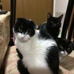 2月22日は猫の日なので関連する記事&動画まとめ