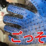 猫の毛がごっそり抜ける?手袋型ペットブラシを使ってみた感想